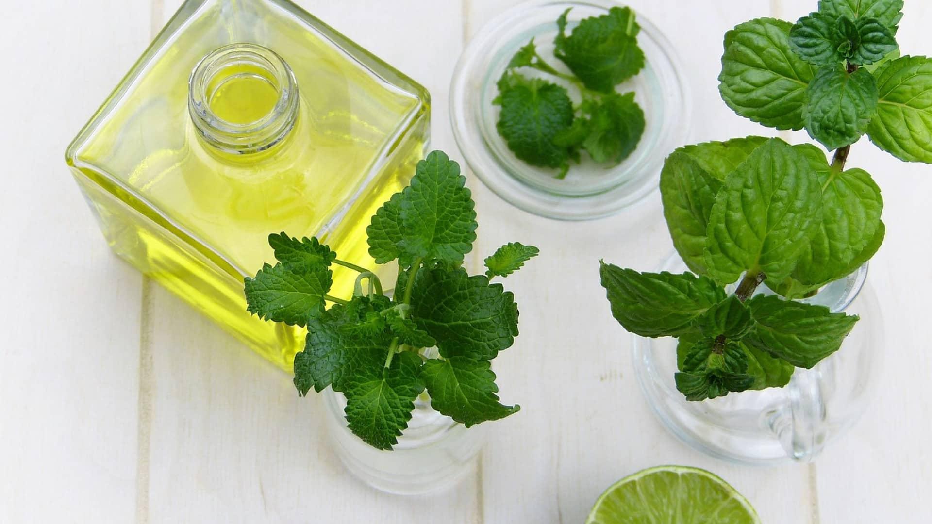 L'huile essentielle de ravintsara, un remède naturel aux nombreux atouts